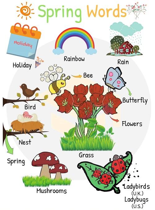 Từ vựng về mùa xuân trong tiếng Anh