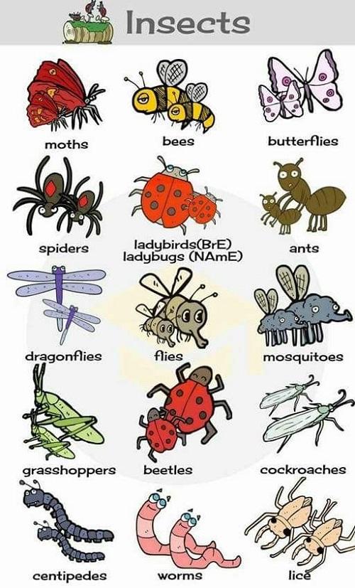 Cách gọi con chuồn chuồn, châu chấu trong tiếng Anh