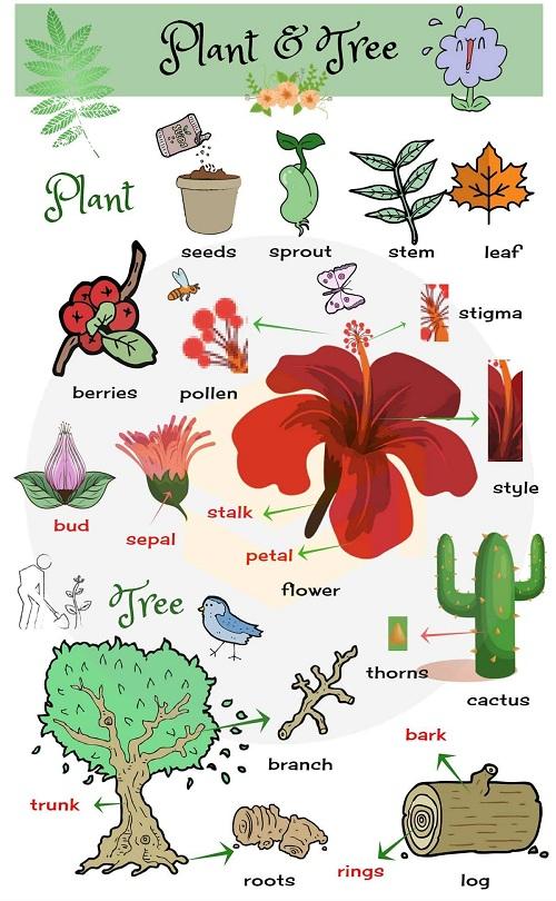 Các bộ phận của cây và hoa trong tiếng Anh